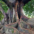 Cemetery Tree by Jason Dymock Photography