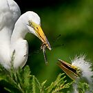 And Mr. Dragonfly Just Popped In For Lunch by J Jennelle