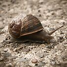 Going Slow by Lady  Dezine