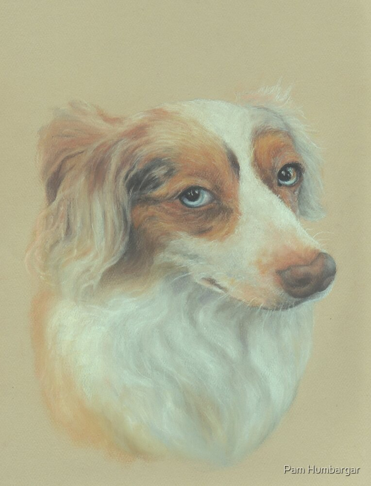 """Callow"", red merle Australian Shepherd by Pam Humbargar"