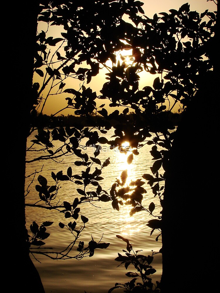 Mangrove Sun by Martice