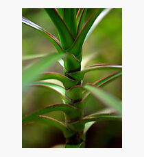 Tropical close up Photographic Print