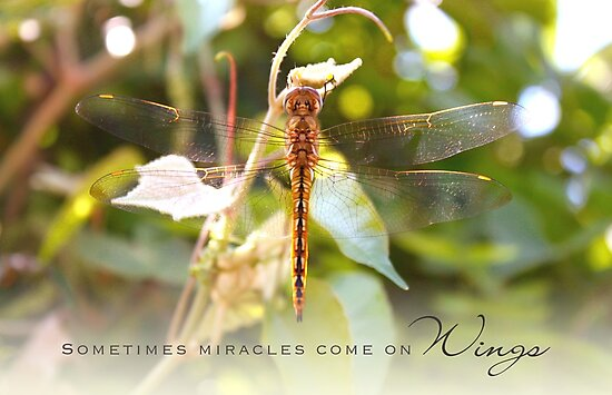 Sometimes Miracles Come On Wings by Franchesca Cox