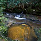 Suburban rainforest by Doug Cliff