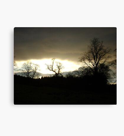 Eye of Trees (sunset, Falkland) Canvas Print