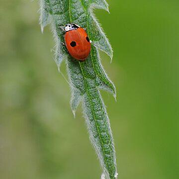 2 spot Ladybird by cherryannette