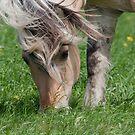Grass Whisper  by DigitallyStill