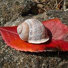 Snails pace by Jess Collett
