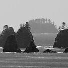 A Dark Coastline. by Todd Rollins