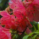 Red flower by zolim