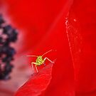 Aphid 4 by Gareth Jones