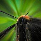Nightmare Bee by Gareth Jones
