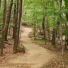 Through the Woods by Sally Kady
