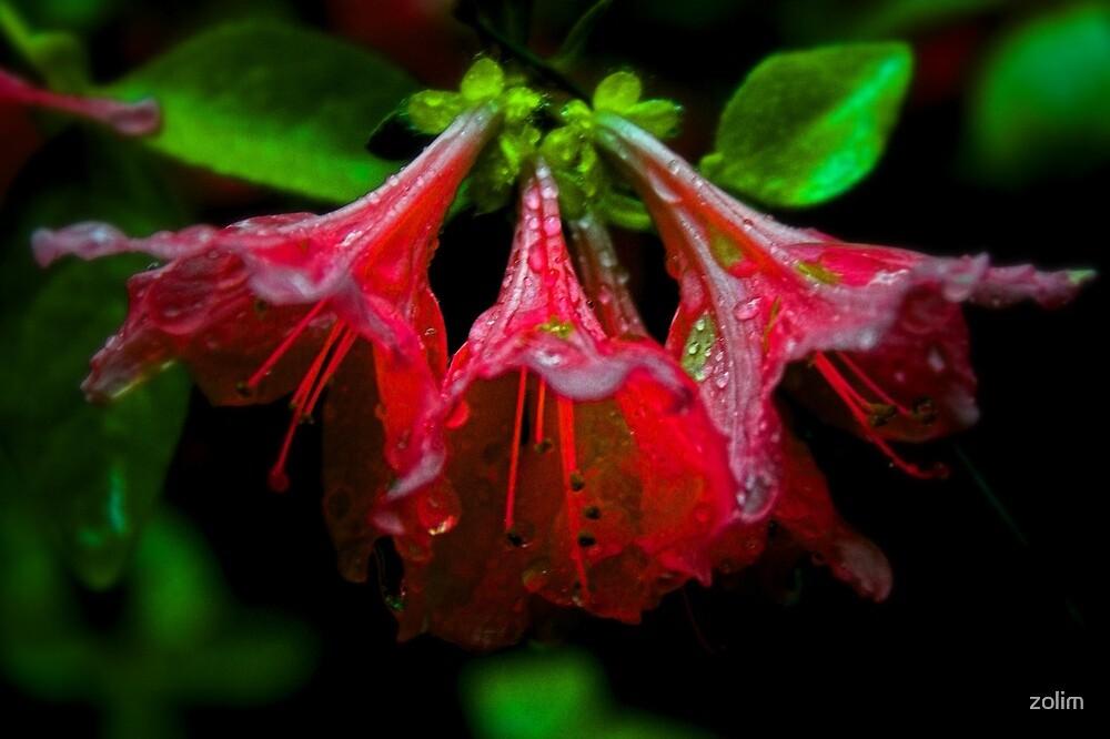 Red flower II. by zolim