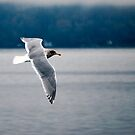 Sea Gull by Robert  Miner