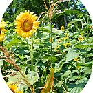 Sunny & Corn by BShirey