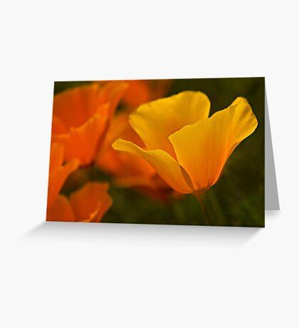 Vibrant Greeting Card