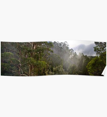Tree Tops Poster