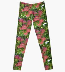 Apples Leggings