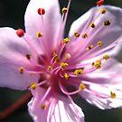 Blossom Pop by Vanessa Barklay