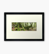 Mossy Myrtle Forest, Cradle Mountain, Tasmania Framed Print