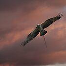 New Nesting Season by byronbackyard