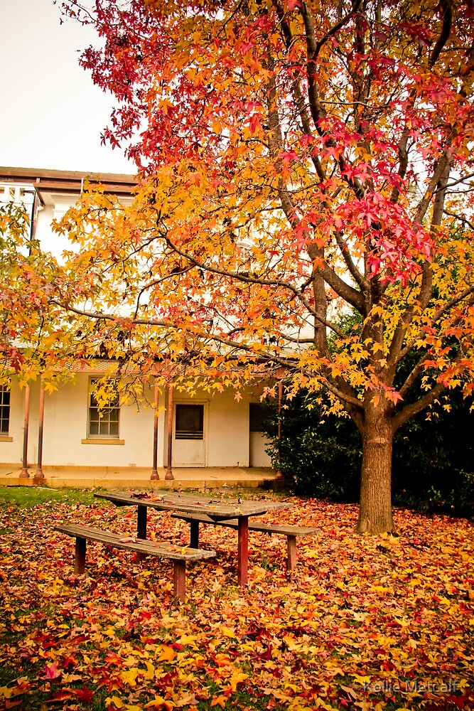 Autumn by Kellie Metcalf