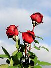 3 Red Roses by DPalmer