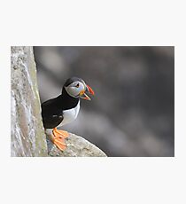Puffin on a ledge, Saltee Island, County Wexford, Ireland Photographic Print