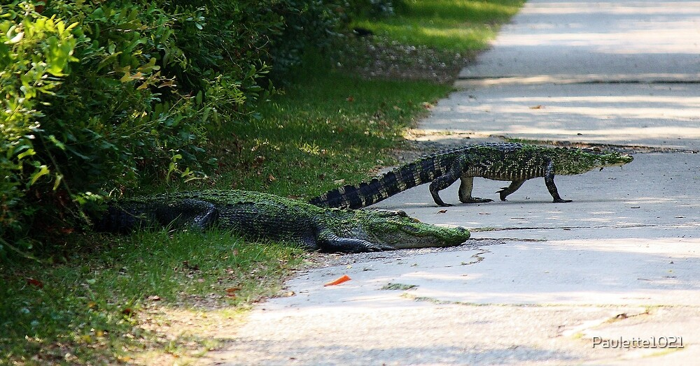 Mama and Baby Alligator Crossing the Road by Paulette1021