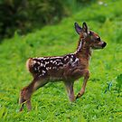 Young Fawn by TonyGeary
