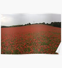 every soldier that has fallen i think their is a flower here for them Poster