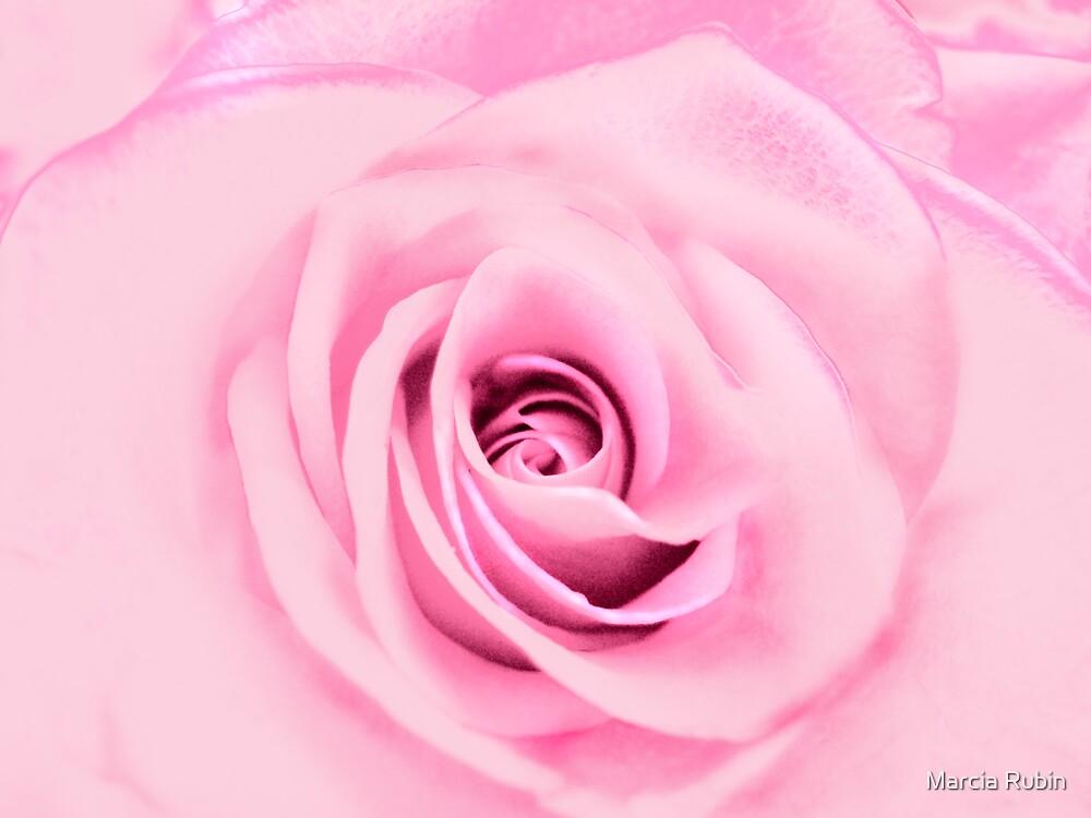 Lovely Pink Rose  by Marcia Rubin