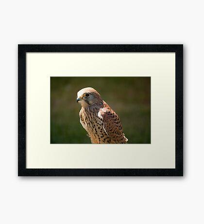 Birds of Prey Series No 2 Framed Print