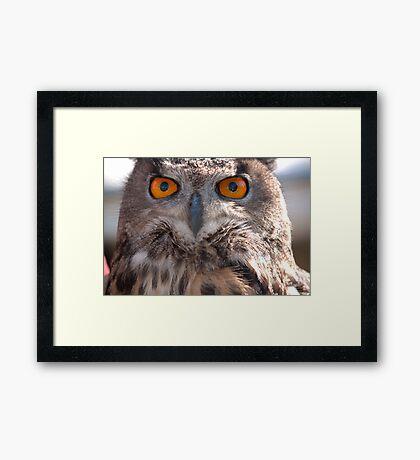 Birds of Prey Series No 4 Framed Print
