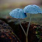 Fungi Season 1112 by Normf