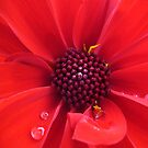 Raindrops in Red by Goldendays
