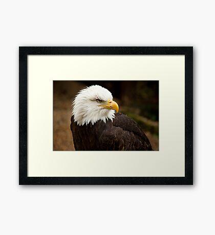 Birds of Prey Series No 6 Framed Print