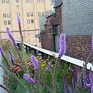 High Line, New York's Elevated Garden and Walking Path by lenspiro