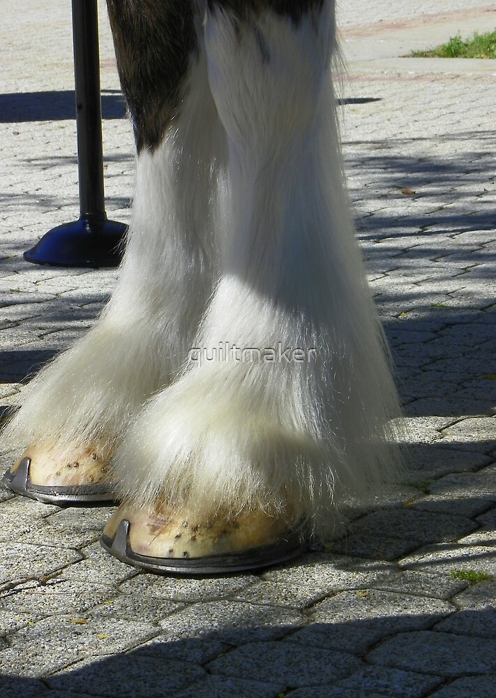 Clydesdale Feet by quiltmaker