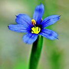 Wild Blue by Danielle Girouard