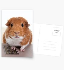 Guinea Pig Gets An Education  Postcards