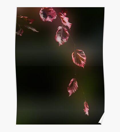 Pink Cascade Poster
