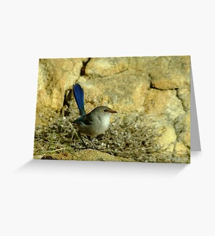 Another Fairy Wren - Sugar Loaf Rock, Western Australia Greeting Card