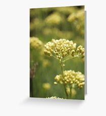 Curry Plant Greeting Card