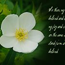 Stand firm in the Lord ~ Philippians 4:1 by Robin Clifton
