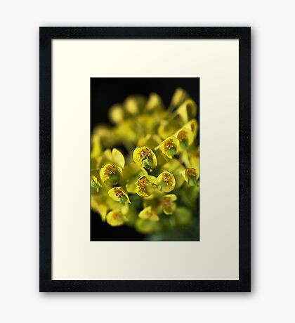 Spurge A Little And Glow Framed Print