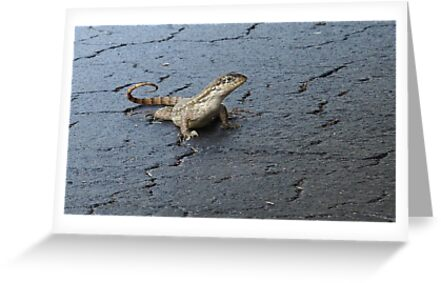 First Incursion - Curly Tailed Lizard by glennc70000