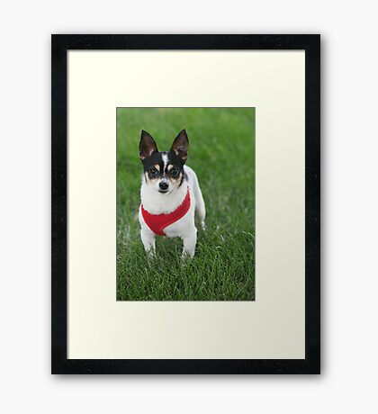 Handsome Eddie Framed Print