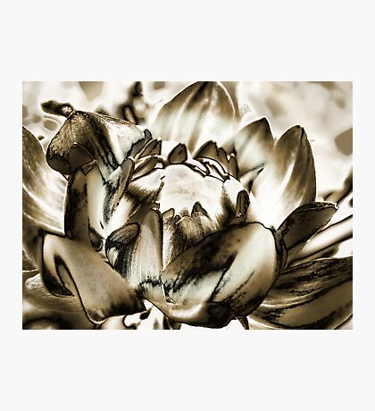 Birth of a Flower  Photographic Print